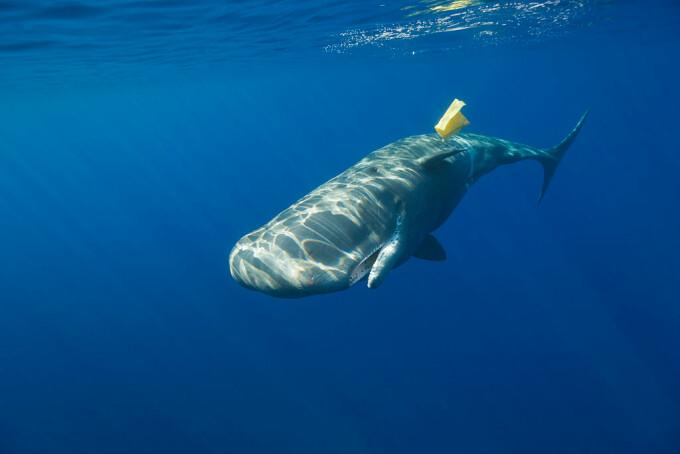 balena plastic