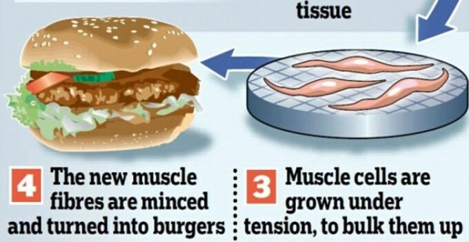 hamburger artificial
