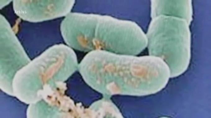 boala infectioasa