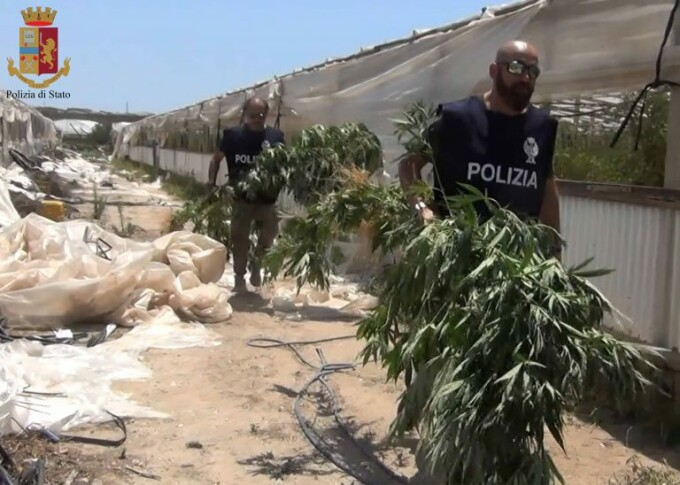 politie captura marijuana