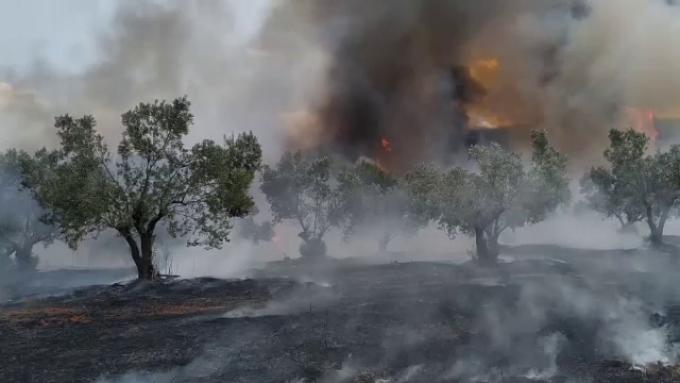 Incendiu de vegetație puternic în Grecia. Sute de copii evacuați