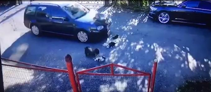 """Pui de câine călcați de un șofer. """"Niciodată nu mi-a fost dat să văd o asemenea cruzime"""" VIDEO"""