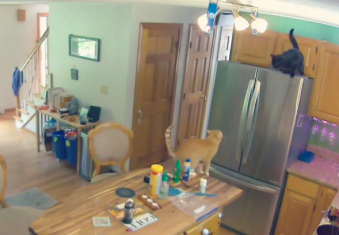 VIDEO Ce făcea o pisică în bucătărie. Stăpânul a fost șocat când s-a uitat pe camerele de supraveghere