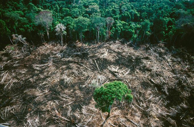 Pădurea amazoniană a ajuns să producă CO2, în loc să-l absoarbă, din cauza intervenției umane
