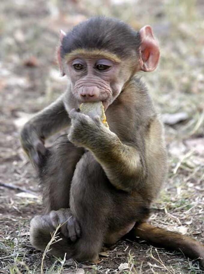 tot ce trebuie să știți despre bitcoins maimuță cum se scrie un indicator pentru opțiuni binare