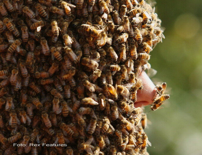 barbat acoperit de albine