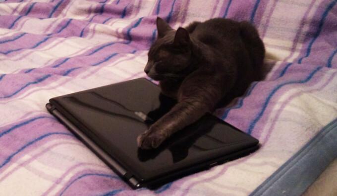 pisica pe calculator