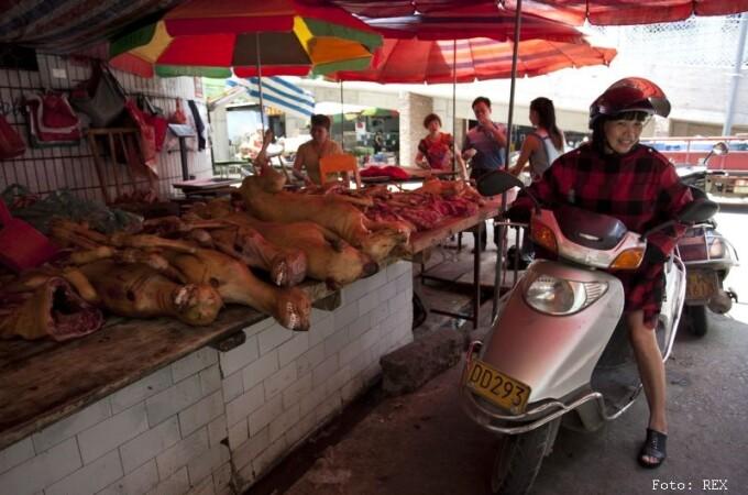 Festivalul carnii de caine din China