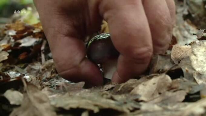 cules de ciuperci
