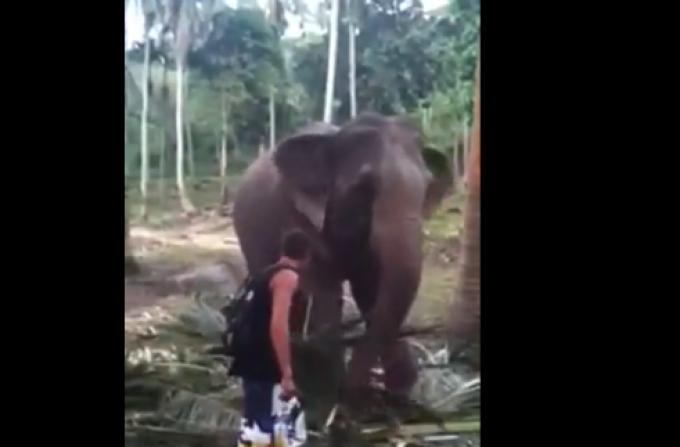 turist, elefant