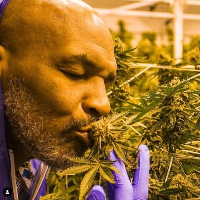 """Cum arată plantația de marijuana din deșert a lui Mike Tyson. """"M-am gândit cât bine pot face"""" - 2"""
