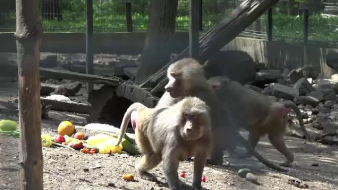 Secrete la zoo: Femeile sălbăticiei