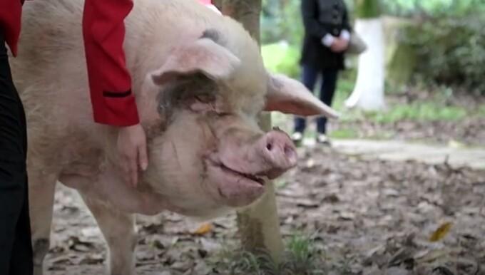 porc China