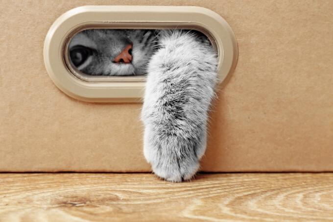 Un pui de pisică a călătorit din România în Marea Britanie într-un autocamion cu mobilă. Cum a supraviețuit