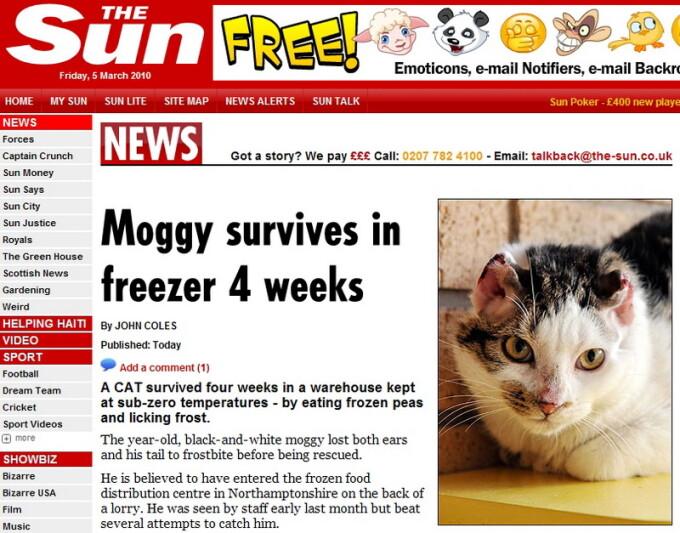 pisica, frigider