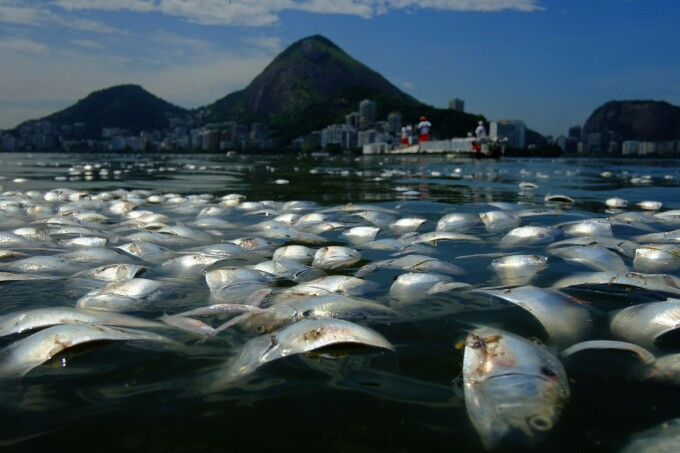 pesti Rio