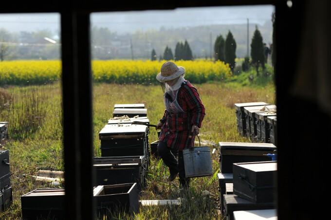 fermier chinez