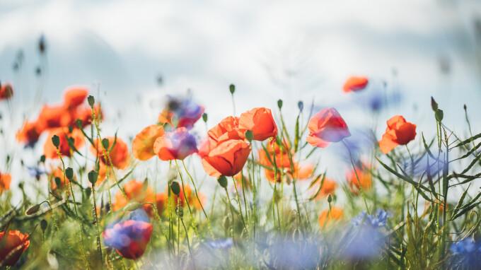 Traditii si Obiceiuri de Florii