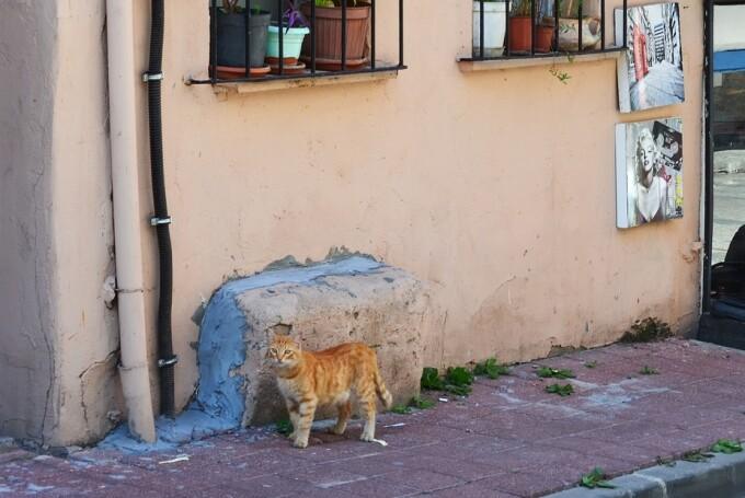 Motivul pentru care o pisică atacă doar bărbați și câini