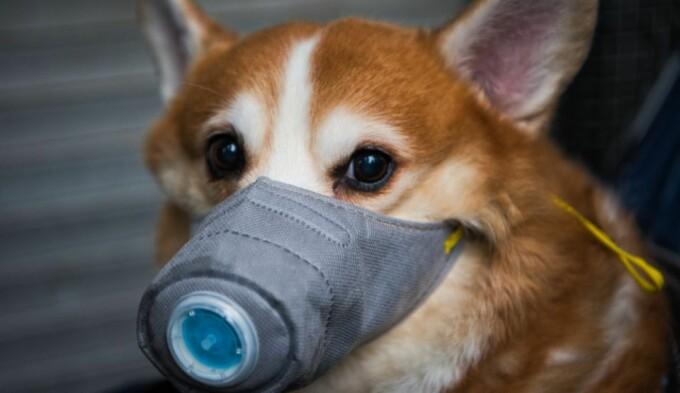 Câinele din Hong Kong suspectat de coronavirus a murit după ce a ieșit din carantină, din cauza stresului