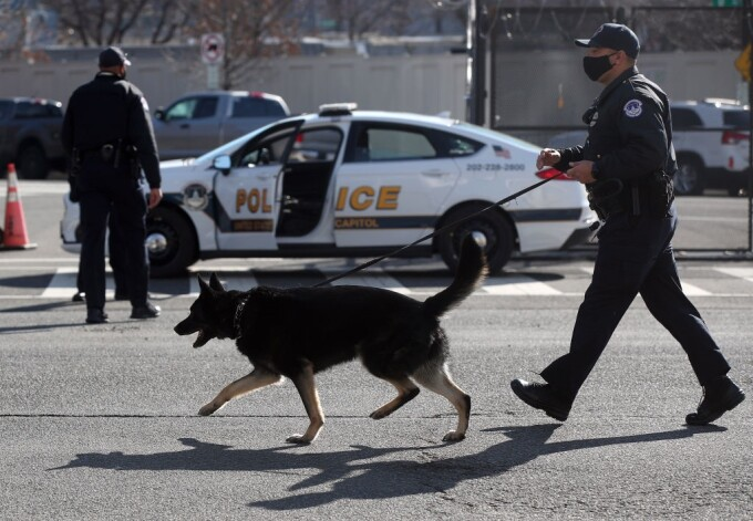 Un câine polițist a descoperit marijuana în valoare de 8 milioane de dolari