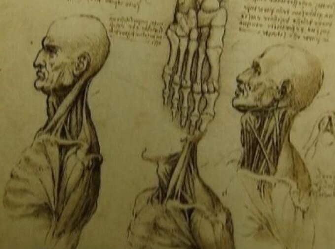 schita anatomica, Leonardo da Vinci