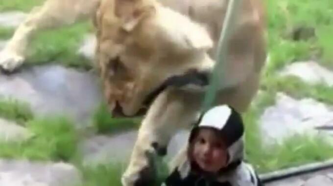 leu Zoo