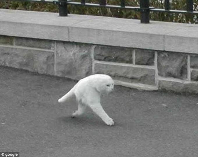 jumatate de pisica