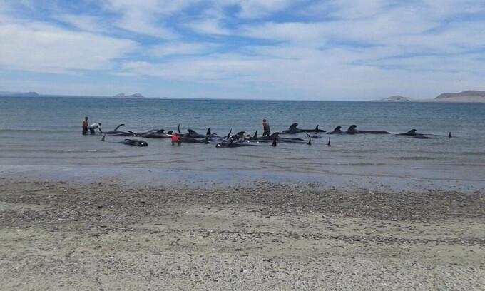 balene esuate Mexic - Agerpres