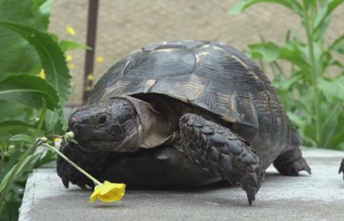 strategie de opțiuni broască țestoasă