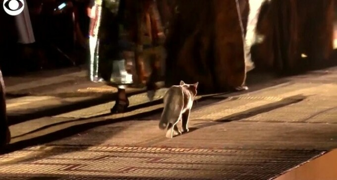 pisică Marrakech