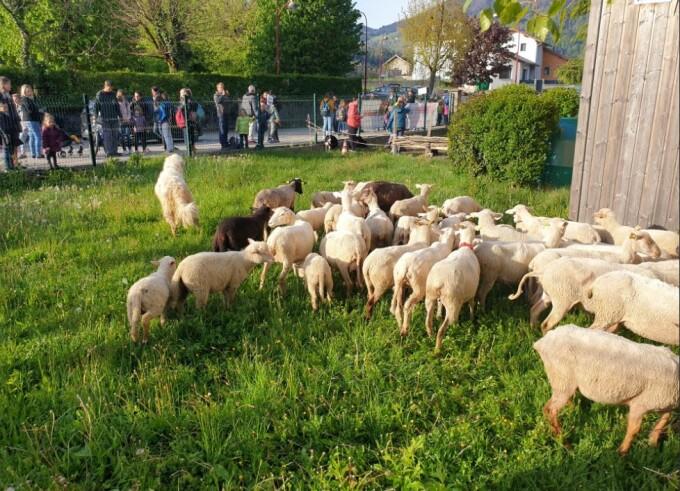 15 oi au fost înscrise la școală, în Franța