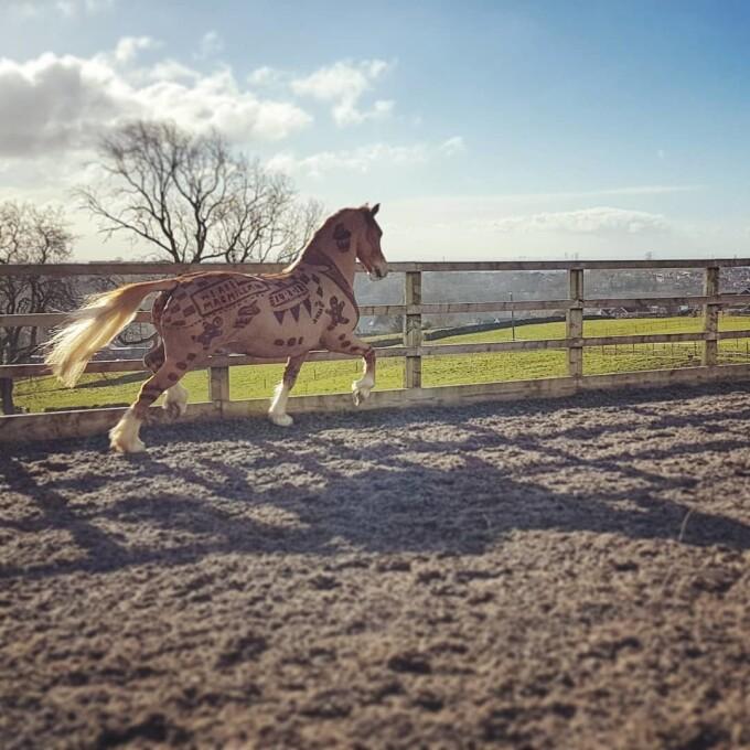 Ce face o tânără din părul cailor - 3