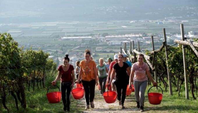 Cine sunt cele 8 muncitoare românce duse în Italia cu avionul privat