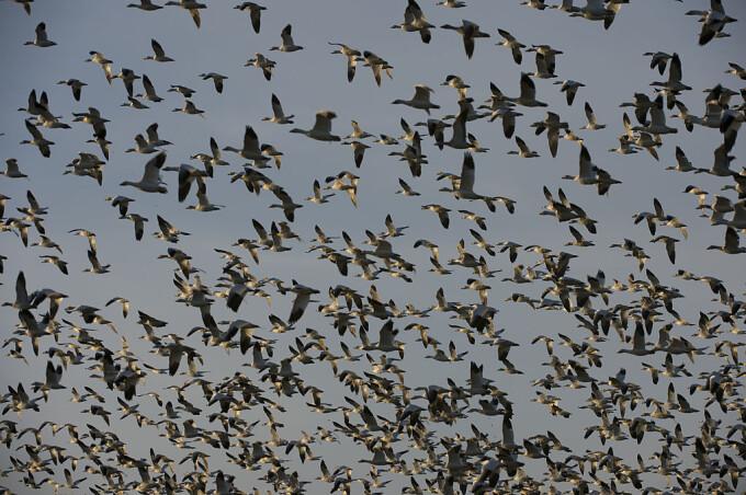 În lume există peste 50 de miliarde de păsări sălbatice. Care sunt cele mai răspândite
