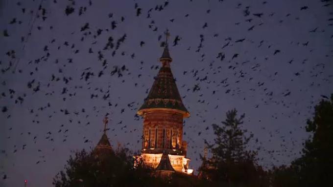 ciori Timisoara