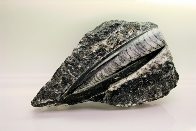 Fosila din Silurian