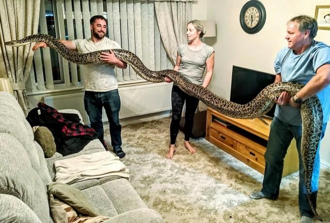 Le-a cumpărat copiilor un șarpe de câțiva cm, dar s-a trezit cu cel mai mare piton din lume - 1
