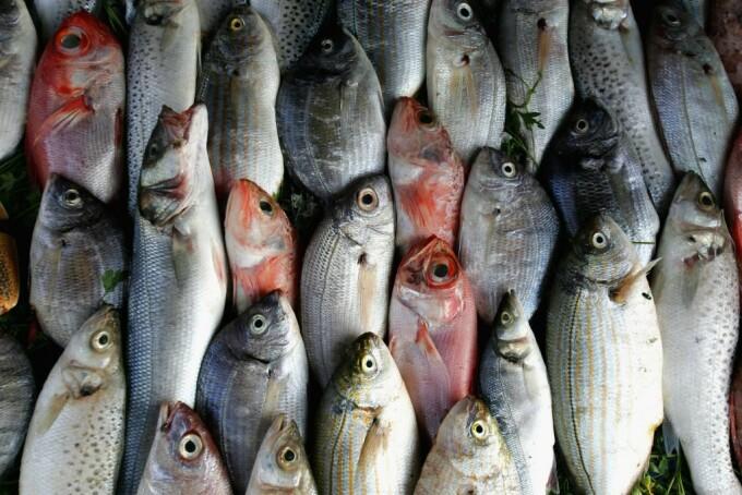 Cercetătorii gălățeni vor să distrugă virusul Covid-19 cu ajutorul solzilor de pește