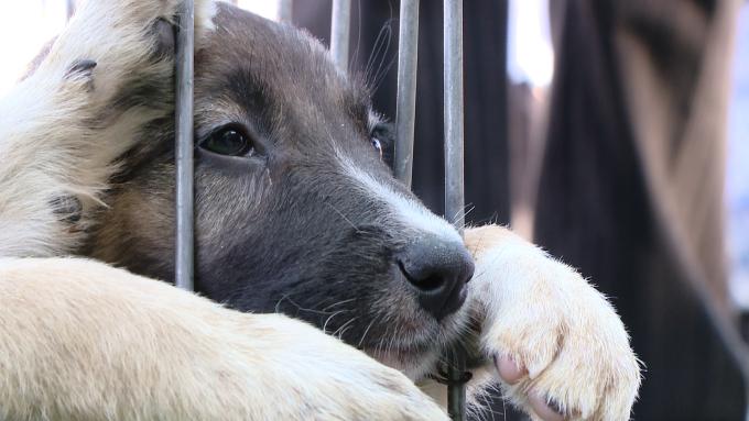 ziua animalelor la Timisoara