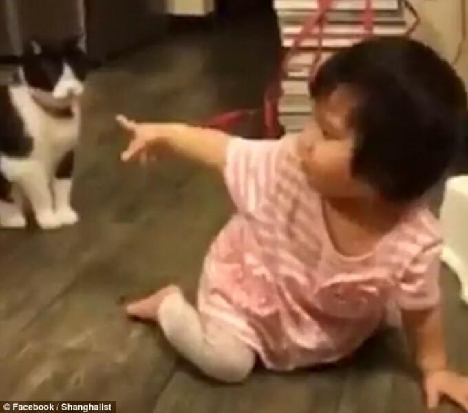 pisica si fetita