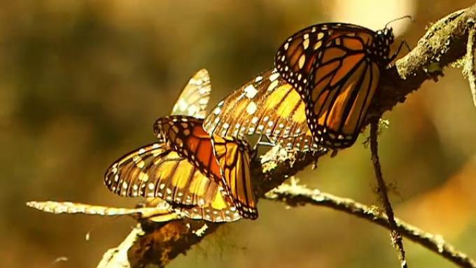 strategie fluture pentru opțiuni posturi vacante de montare la domiciliu