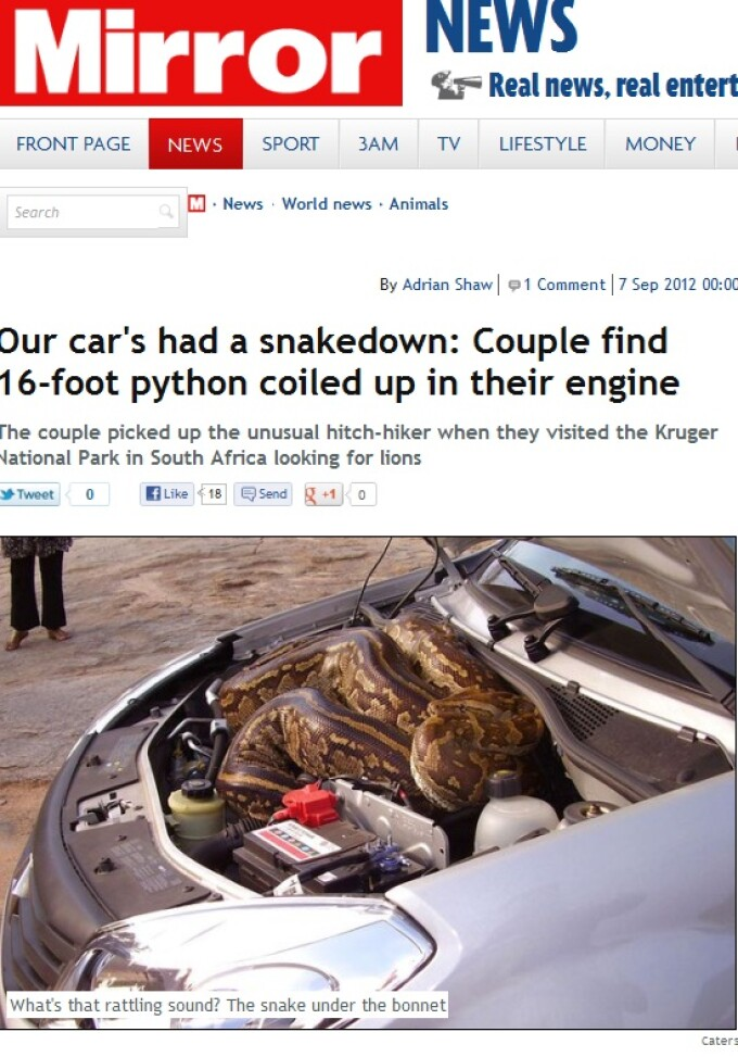 piton in motorul masinii