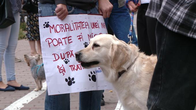 protest eutanasiere caini