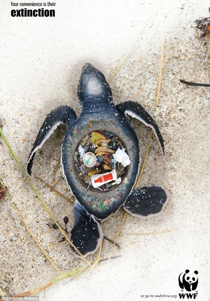 campanie gunoaie plaja