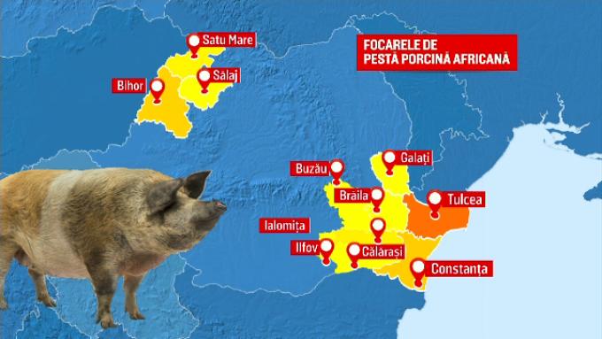 pesta porcina, despagubiri, animale,