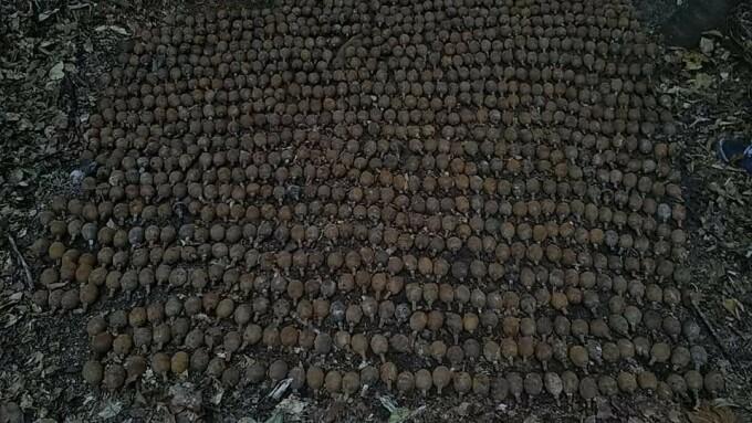 Peste o mie de grenade germane din Primul Război Mondial au fost descoperite în Vrancea - 5