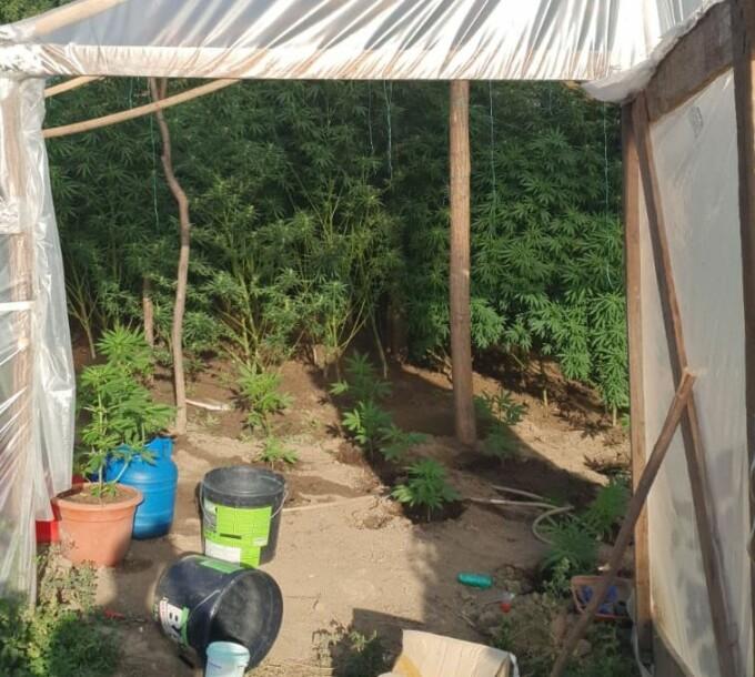 Percheziții la traficanții de droguri din Iași. Este vizat și fiul unui preot