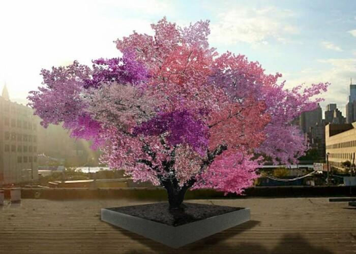 Pomul care produce 40 de tipuri de fructe! FOTO