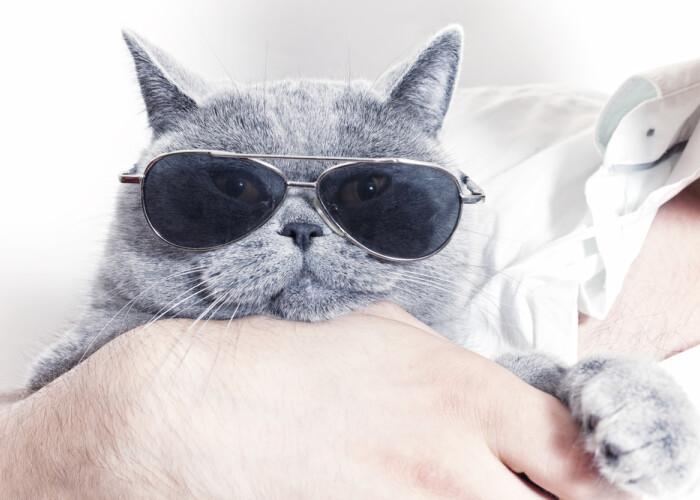 Povestea pisicii care i-a adus proprietarei o avere de 100 de milioane de dolari!